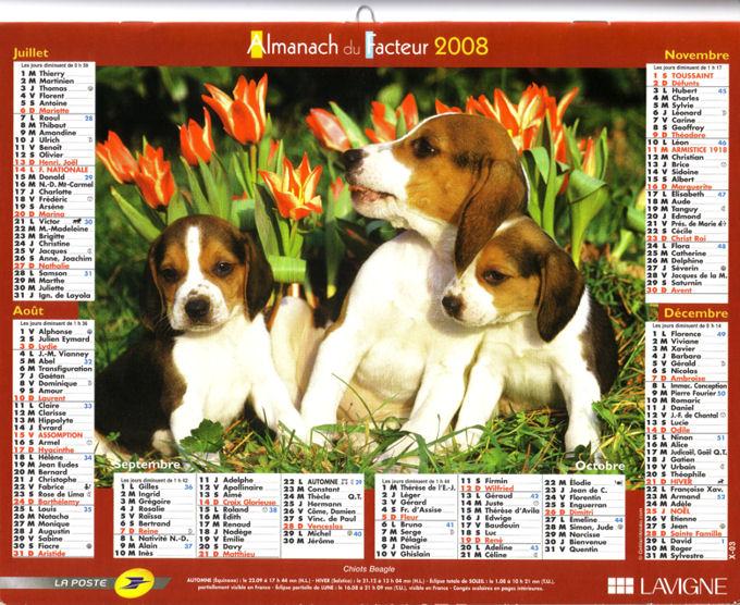 les chiots, des beagles